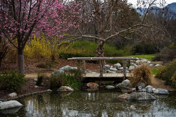 Foto del giardino zen in stile giapponese n.12