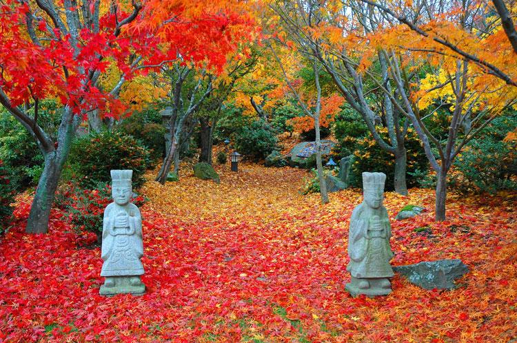 Foto del giardino zen in stile giapponese n.20