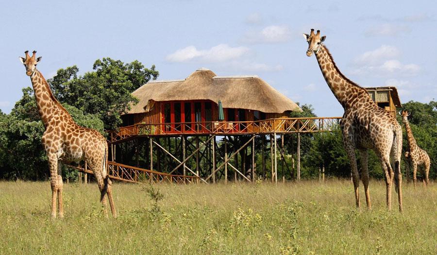 Foto dell'hotel sugli alberi Pezulu Tree House Lodge in Sudafrica