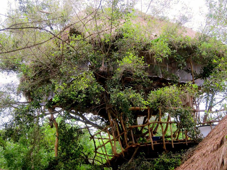 Foto dell'hotel sugli alberi Saraii Village in Sri Lanka
