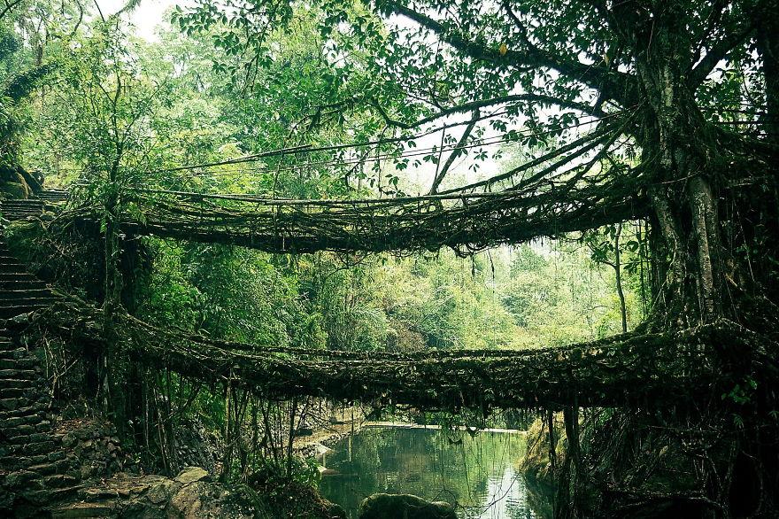 Foto del ponte di radici in India