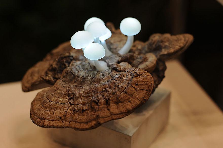 Foto della lampada con funghi a led n.02