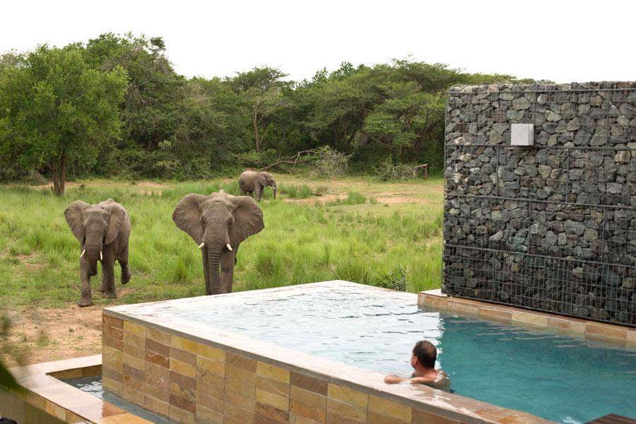 Dettaglio della piscina dell'hotel Phinda Homestead in Sudafrica