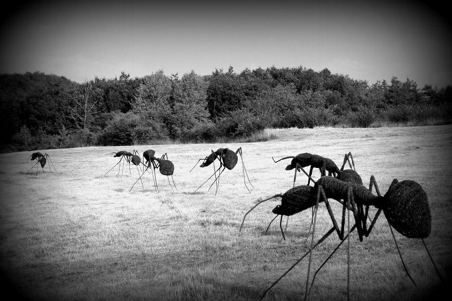 Sculture di formiche realizzate in filo di ferro