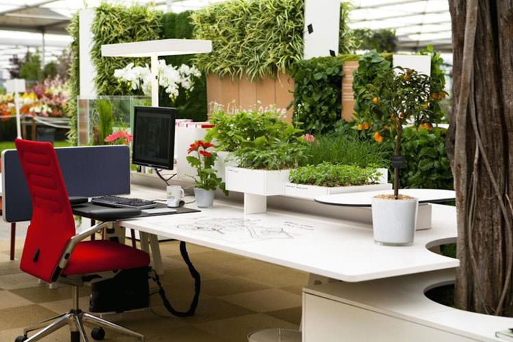 Idee per la creazione di giardini interni n.10