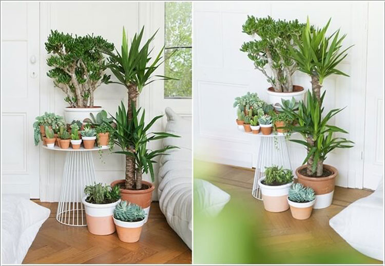 Tavolino da salotto da riempire con le piante