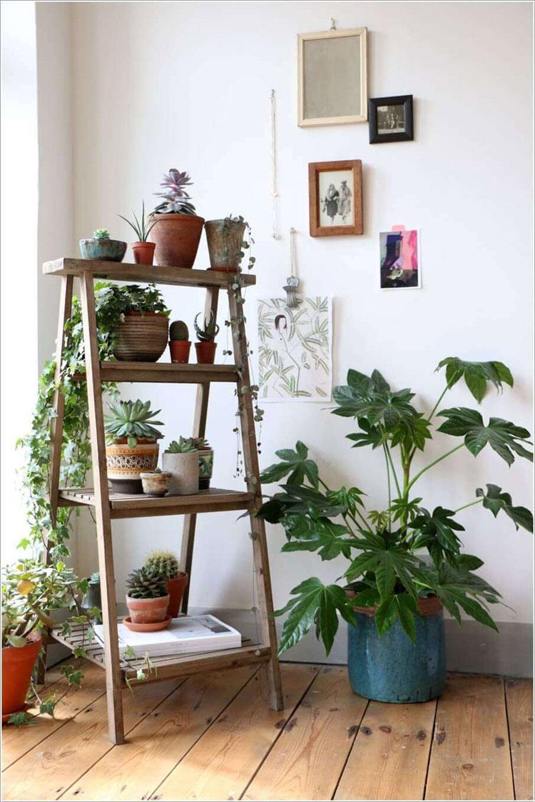 Scala rustica per posizionare le piante
