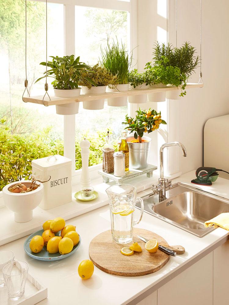 Idee per arredare la cucina con le piante n.04