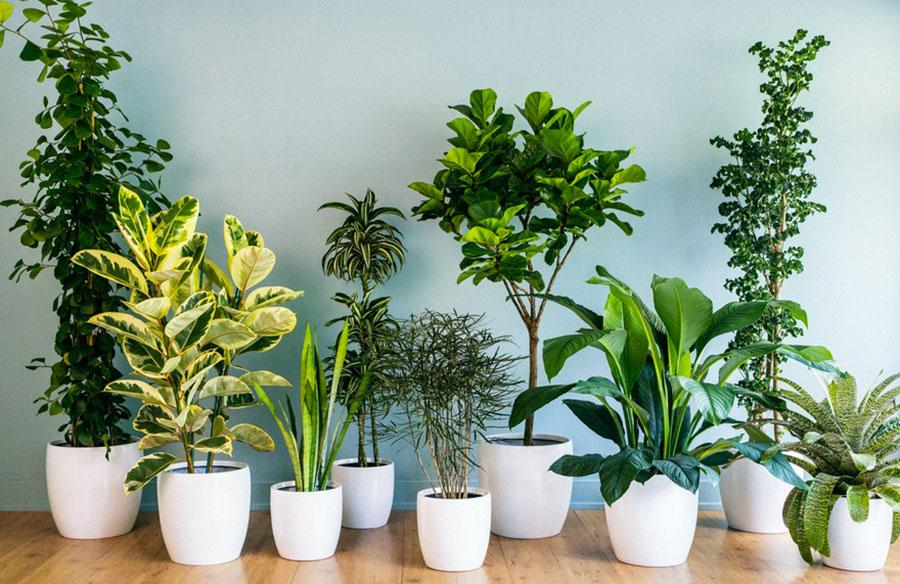 Dove posizionare le piante interne