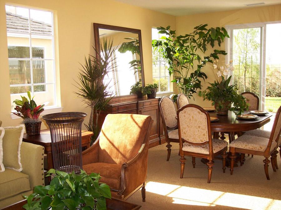 Idee per arredare il salotto con piante da interno - Piante verdi interno ...
