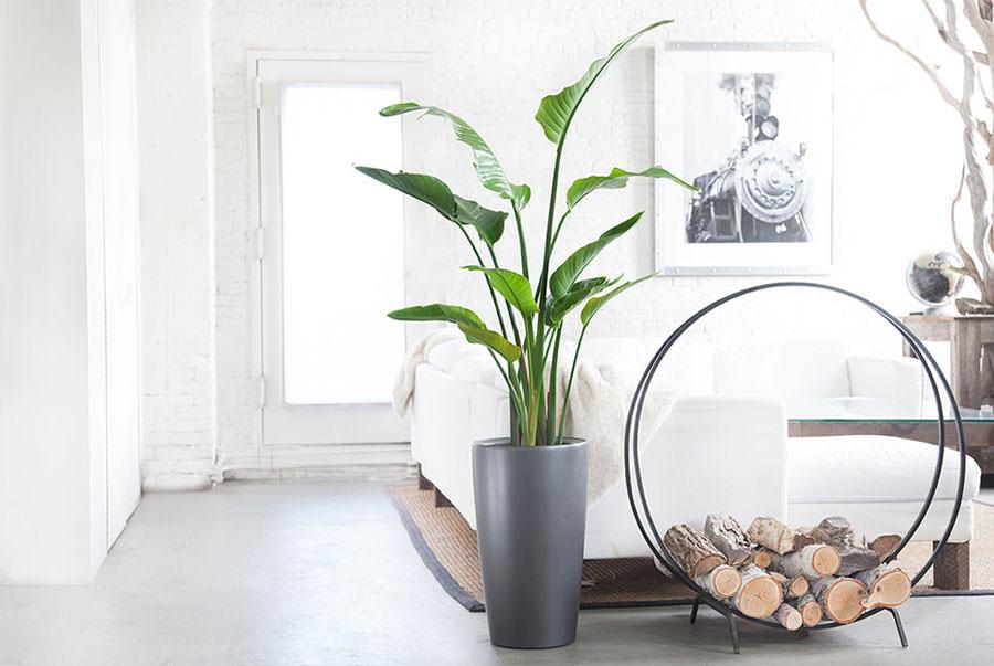 idee per arredare il salotto con piante da interno