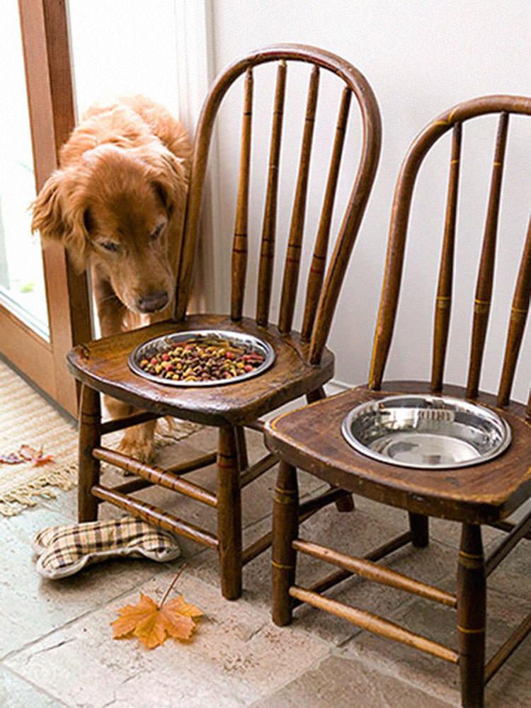 Vecchie sedie trasformate in portaciotole per cani