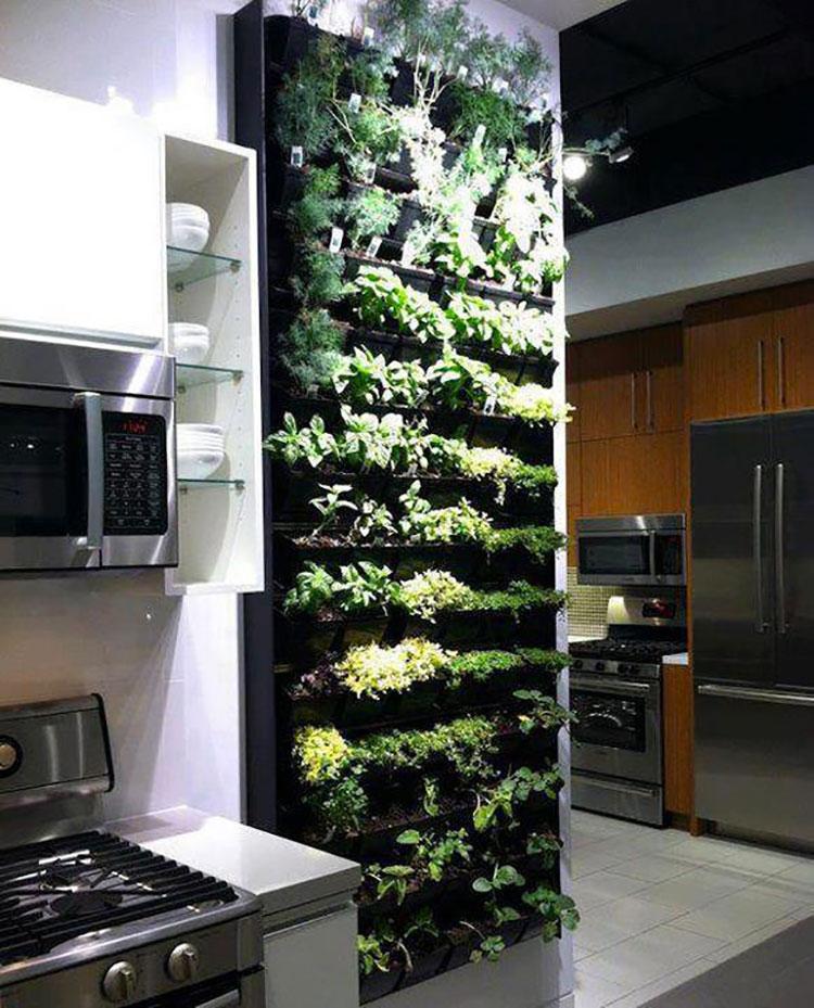 Parete Piante Aromatiche : Giardino verticale interno idee per pareti verdi in