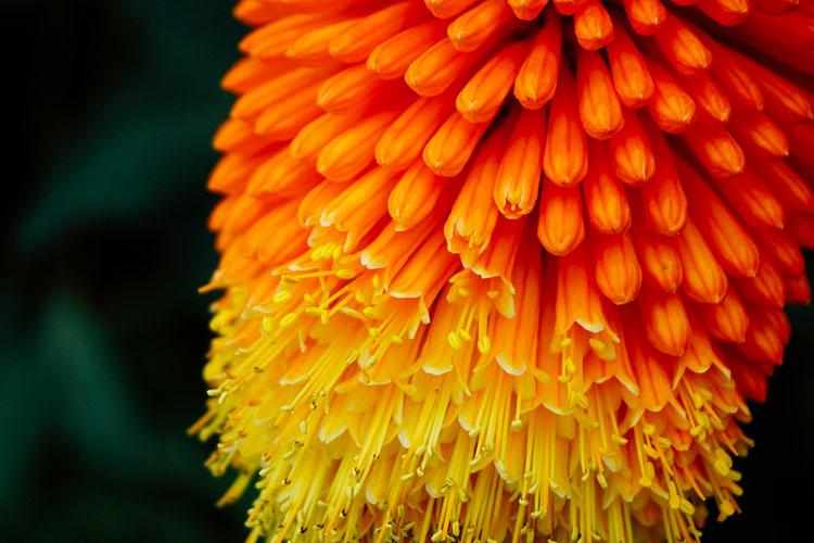 Significato dell'arancione nel Feng Shui width=