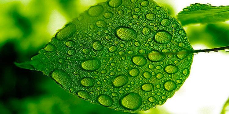 Significato del verde nel Feng Shui