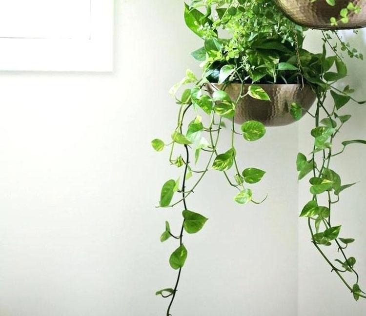 Quali piante scegliere per un bagno Fen Shui 2