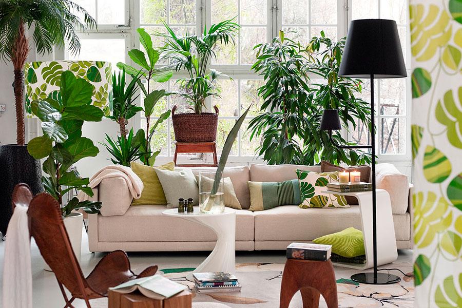Idee per arredare con piante da soggiorno n.21