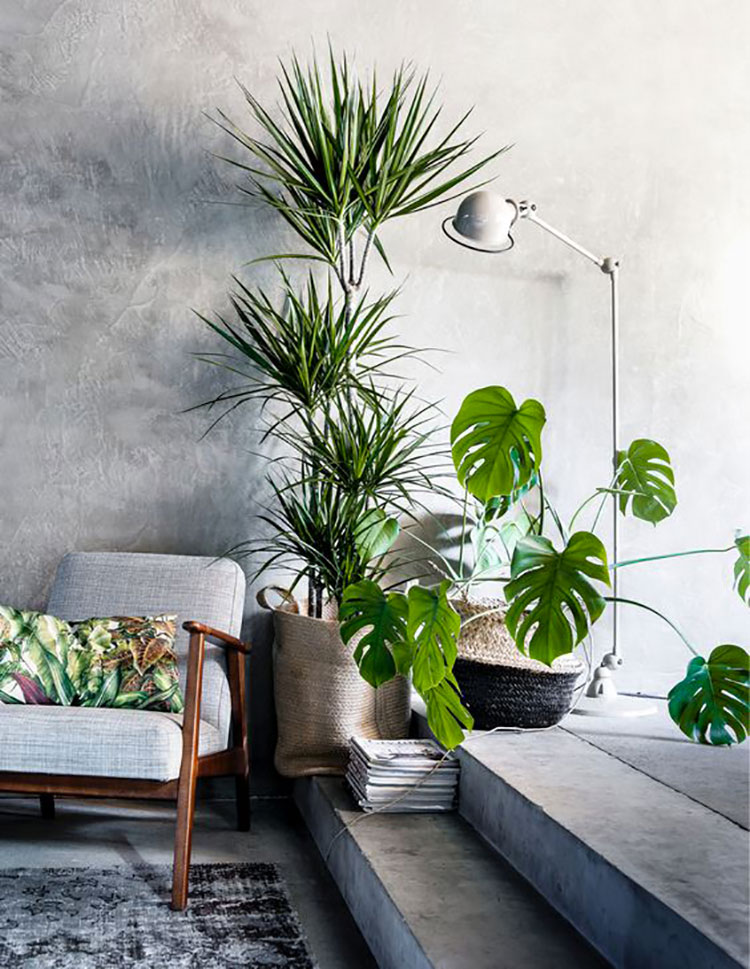 Idee per arredare con piante da soggiorno n.23
