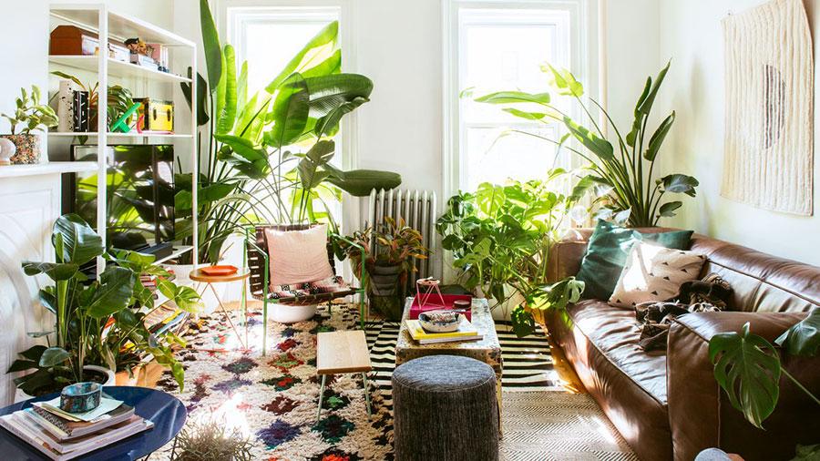 Idee per arredare con piante da soggiorno n.24