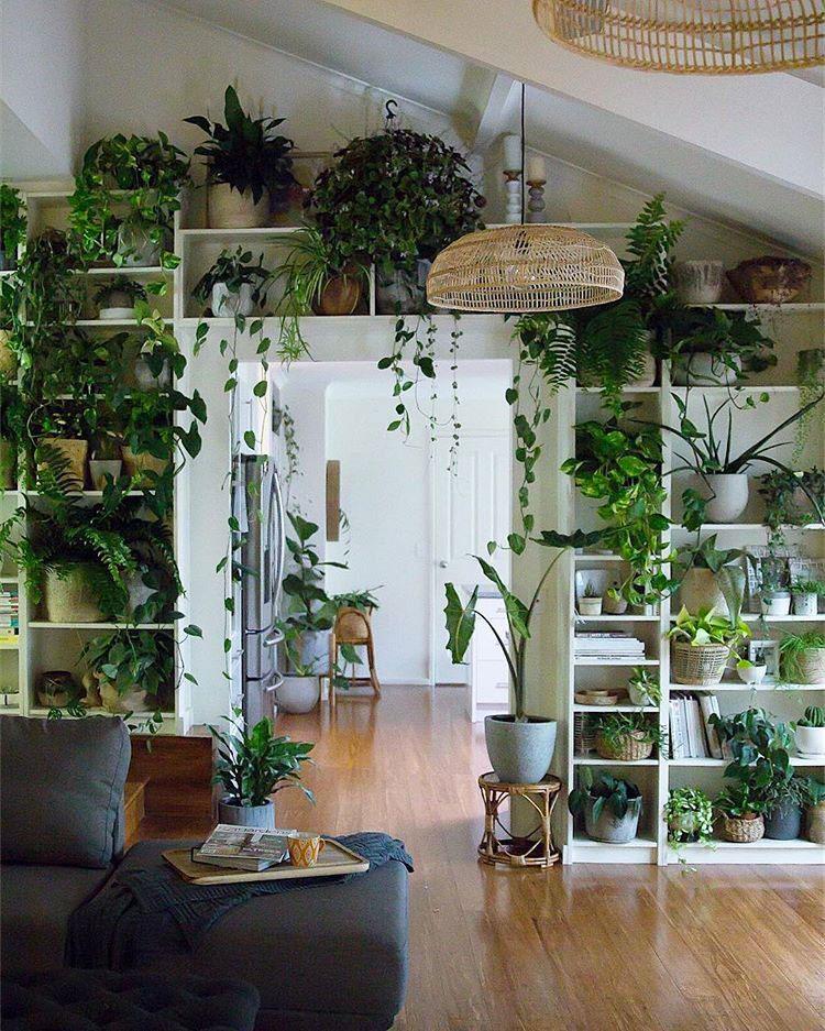 Idee per arredare con piante da soggiorno n.29
