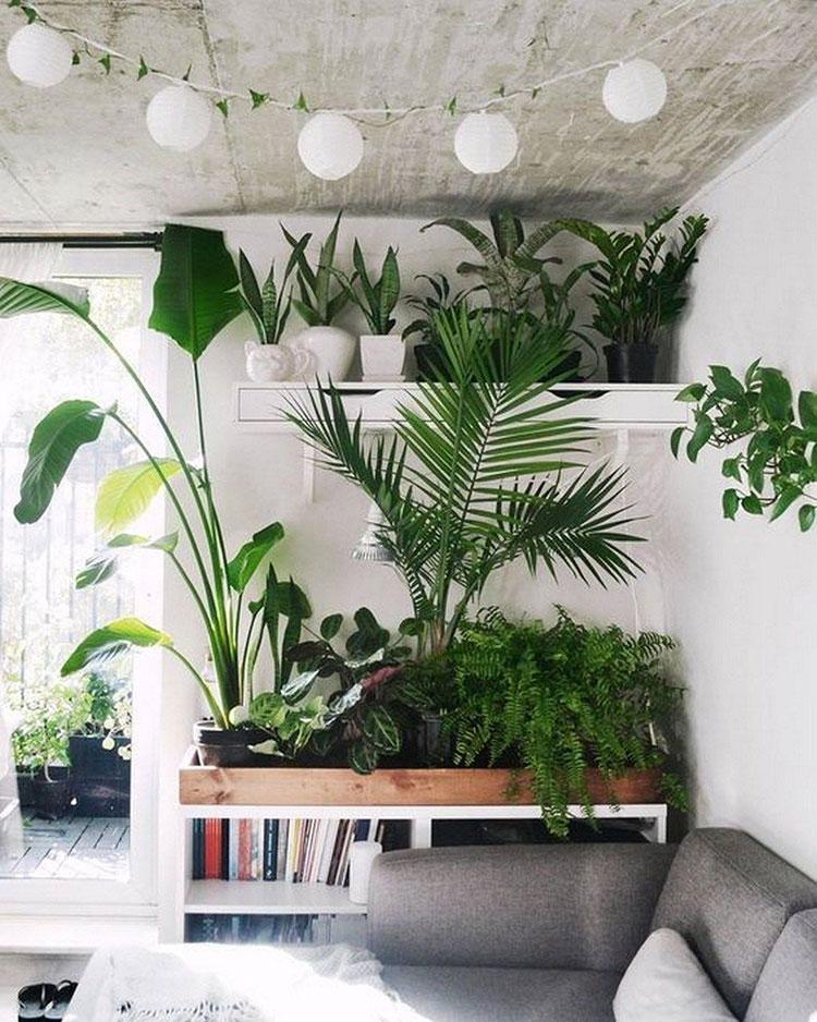 Idee per arredare con piante da soggiorno n.30