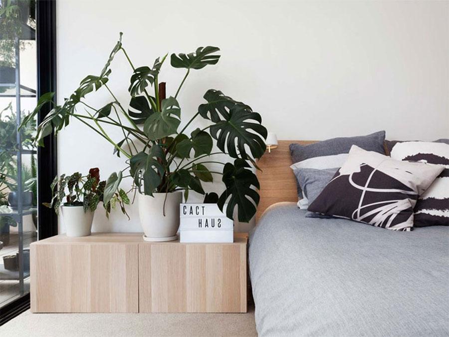 Idee per arredare la camera da letto con le piante n.07