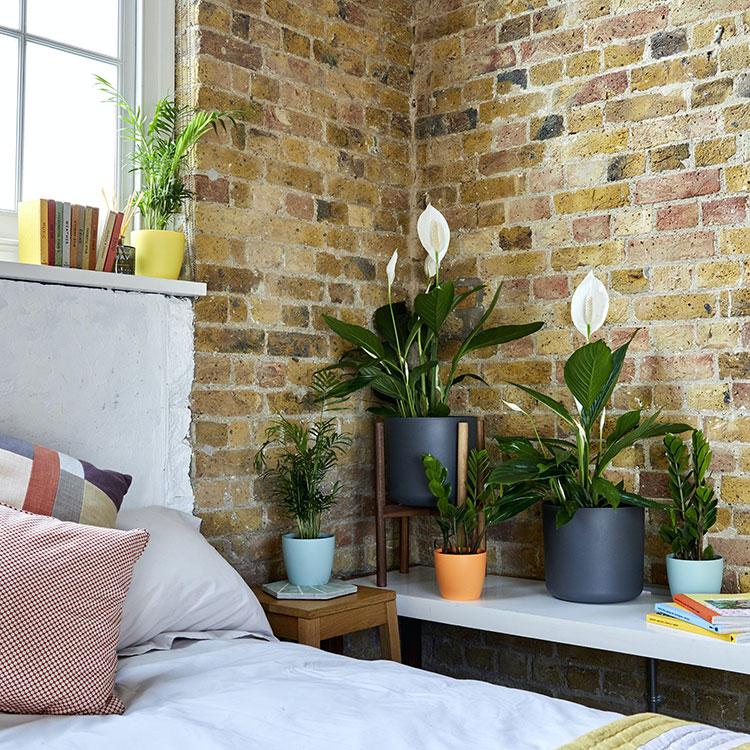 Idee per arredare la camera da letto con le piante n.09